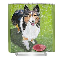 Let Us Play  Border Collie Shower Curtain by Phyllis Kaltenbach