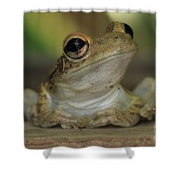 Let's Talk - Cuban Treefrog Shower Curtain