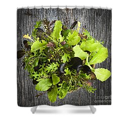 Lettuce Seedlings Shower Curtain by Elena Elisseeva
