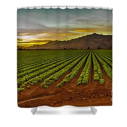 Lettuce Sunrise Shower Curtain by Robert Bales