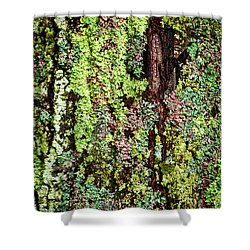 Lichen Shower Curtain by Elena Elisseeva