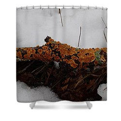Lichen N'snow Shower Curtain