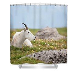Lie Down In Green Pastures Shower Curtain by Jim Garrison
