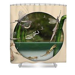 Life Cycle Of Mayfly Ephemera Danica - Mouche De Mai - Zyklus Eintagsfliege - Stock Illustration - Stock Image Shower Curtain