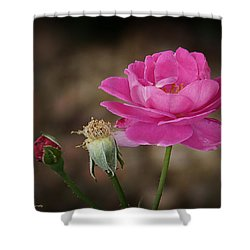 Shower Curtain featuring the photograph Life by Lucinda Walter
