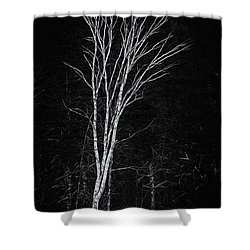Life's A Birch No.2 Shower Curtain by Mark Myhaver