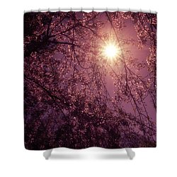 Light And Cherry Blossoms Shower Curtain by Vivienne Gucwa