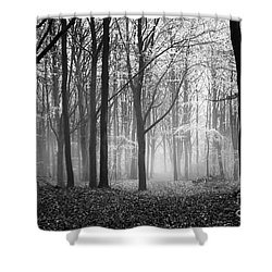 Light And Shadow Shower Curtain by Anne Gilbert