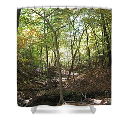 Light And Shadow Through The Forest Shower Curtain