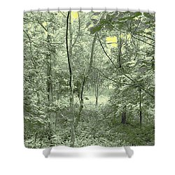 Light Forest Scene Shower Curtain by Tom Wurl