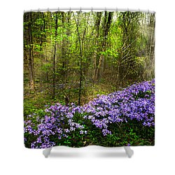 Light Of The Forest Fairies Shower Curtain by Debra and Dave Vanderlaan