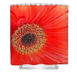 Shower Curtain featuring the photograph Light On by Katy Mei