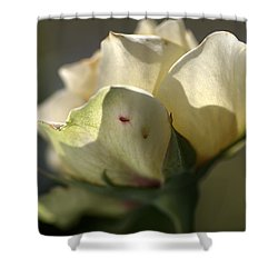 Light On My Face Shower Curtain by Joy Watson