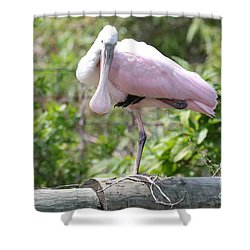 Light Pink Roseate Spoonbill Shower Curtain by Carol Groenen