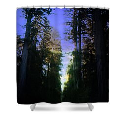 Shower Curtain featuring the digital art Light Through The Forest by Cathy Anderson