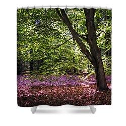 Light Tree In Hoge Veluwe National Park. Netherlands Shower Curtain by Jenny Rainbow