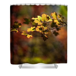 Lightly Falling Shower Curtain by Aaron Aldrich