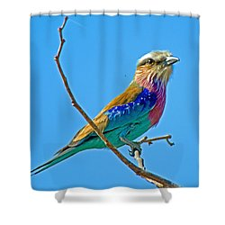 Lilac-breasted Roller In Kruger National Park-south Africa Shower Curtain