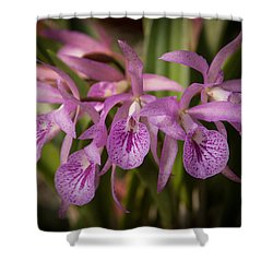 Lilac Orchid Cluster  Shower Curtain by Penny Lisowski