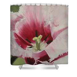 Lilicaea Tulipa Shower Curtain by Claudia Goodell