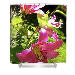 Shower Curtain featuring the photograph Lilies In The Garden by Sher Nasser
