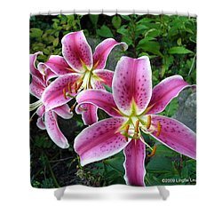 Shower Curtain featuring the photograph Lilies Of The Field by Lingfai Leung