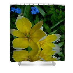 Lilium Of Gold Shower Curtain by Pepita Selles