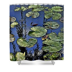 Lilly Pond Shower Curtain by Frozen in Time Fine Art Photography