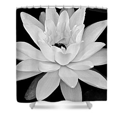 Lilly White Shower Curtain by Frozen in Time Fine Art Photography