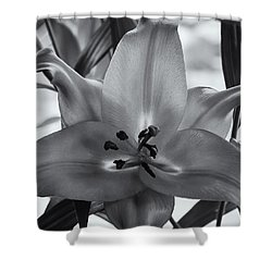 Lily 16 Shower Curtain by Mark Myhaver