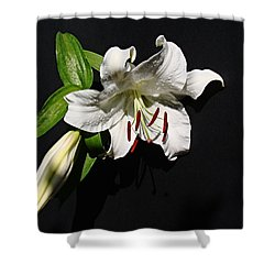 Lily At Daybreak Shower Curtain