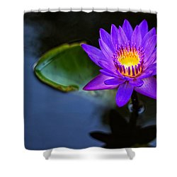 Shower Curtain featuring the photograph Lily Awakens by Dave Files