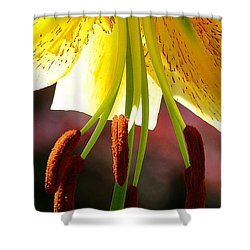 Lily Chandelier Shower Curtain