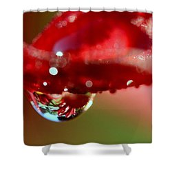 Shower Curtain featuring the photograph Lily Droplets by Suzanne Stout