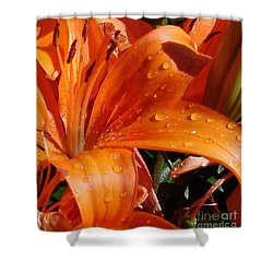 Shower Curtain featuring the photograph Lily Drops by Kerri Mortenson