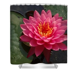 Lily Flower In Bloom Shower Curtain by Michael Porchik