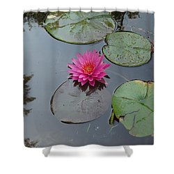 Lily Flower Shower Curtain by Michael Porchik