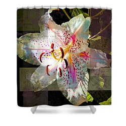 Lily From Whitefish Point Michigan Shower Curtain