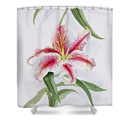 Lily Shower Curtain by Izabella Godlewska de Aranda
