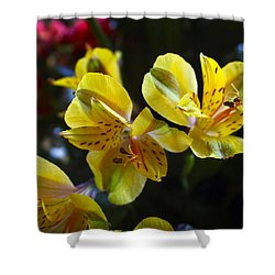 Lily Of The Incas Shower Curtain by Kurt Van Wagner
