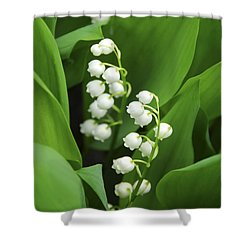 Lily-of-the-valley  Shower Curtain