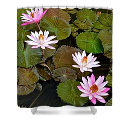 Lily Pad Haven Shower Curtain by Frozen in Time Fine Art Photography