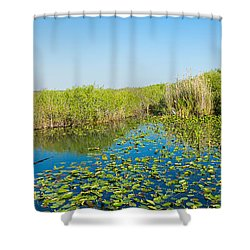 Lily Pads In The Lake, Anhinga Trail Shower Curtain