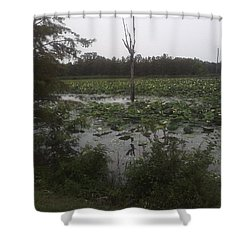 Shower Curtain featuring the photograph Lily Pads by Fortunate Findings Shirley Dickerson