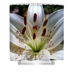 Shower Curtain featuring the photograph Lily by Patti Whitten