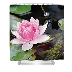Lily Pond Shower Curtain by Susan Schroeder