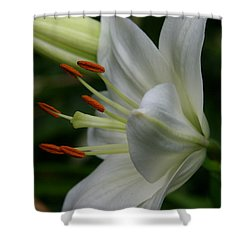 Shower Curtain featuring the photograph Lily Pure by Denyse Duhaime