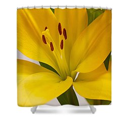 Lily Shower Curtain by Scott Carruthers