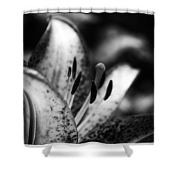 Lily Surprise Shower Curtain by Shelly Gunderson