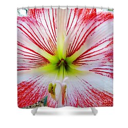 Lily Wow Shower Curtain